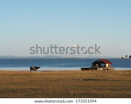 buffalo and the hut infront of the river
