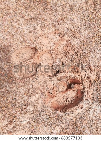 Cow Footprint Stock Images, Royalty-Free Images & Vectors ...