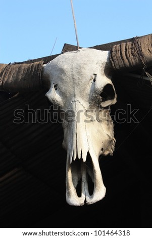 Buffalo skull, hanging at the top of the roof - stock photo