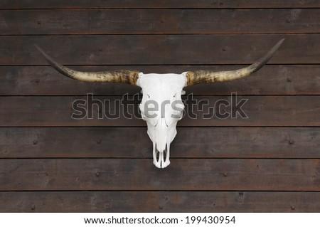 Buffalo skull on old wooden wall - stock photo