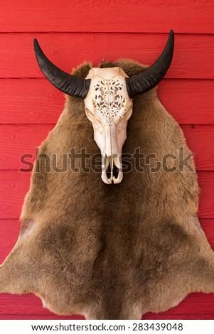 Buffalo skull on red wooden wall - stock photo