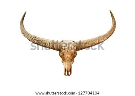 Buffalo skull with mystic symbol isolated on white background - stock photo