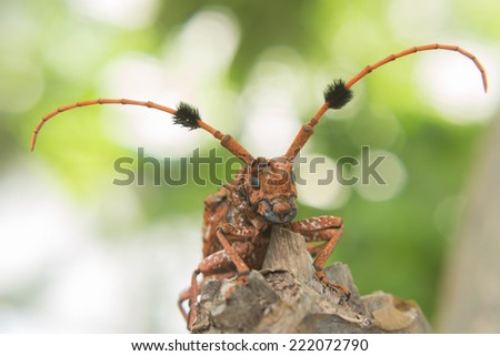 Bug has a weevil. - stock photo