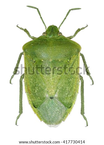 Bug isolated on a white background