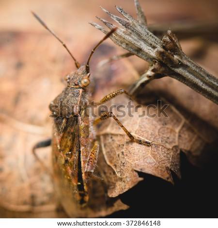 bug macro - stock photo
