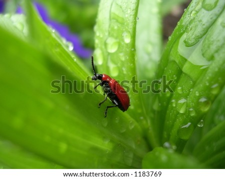 Bug on a grass - stock photo