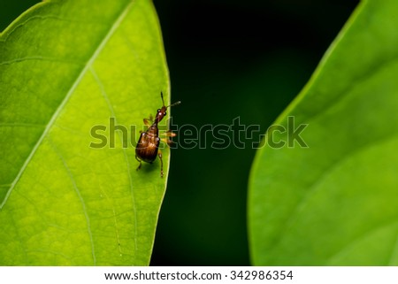 bug on leaf - stock photo