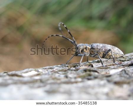 bug on the log - stock photo