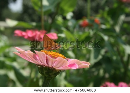 Bug on Top of Pink Flower