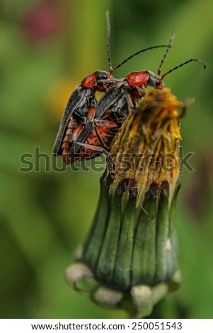 Bugs making love - green background