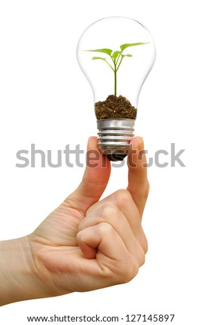 bulb in a hand isolated on a white  background