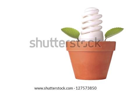 Bulb in Pot - stock photo