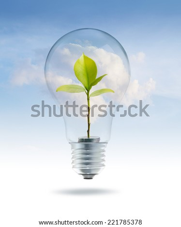 Bulb light with money green tree inside on sky blue cloud background