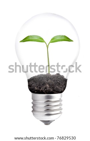 Bulb with green plant - stock photo