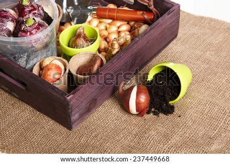 bulbs, gardening tools and peat on white background  - stock photo