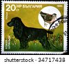 BULGARIA - CIRCA 1985: A stamp printed by Bulgaria shows a cocker spaniel circa 1985. - stock photo