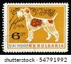 BULGARIA - CIRCA 1960: A stamp printed in Bulgaria showing Foxterrier, circa 1960 - stock photo