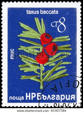 "BULGARIA - CIRCA 1976: A Stamp printed in BULGARIA shows image of a Yew with the description ""Taxus baccata"", series, circa 1976"