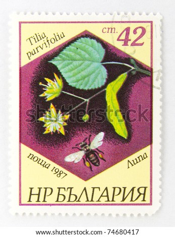 BULGARIA - CIRCA 1987: A stamp printed in Bulgaria, shows Tilia parvifolia, Bees and Plants series, circa 1987.