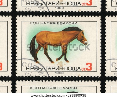 "BULGARIA - CIRCA 1980: A used postage stamp printed in Bulgaria from the ""Horse Breeds"" issue, showing a Przewalski horse. - stock photo"
