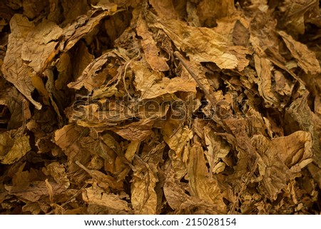 Bulk tobacco macro view, close up - stock photo
