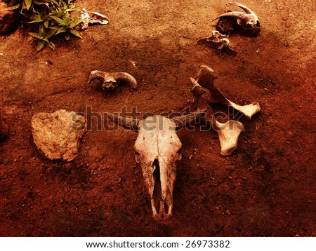 Bull and Goat Skulls and bones - stock photo