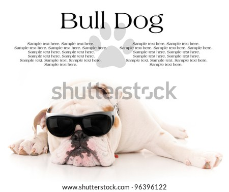Bull Dog Wearing Sunglasses Resting with Text Space Above - stock photo