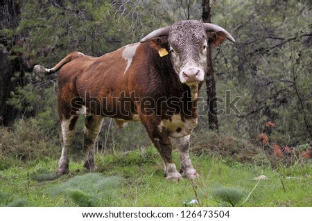 bull in the forest - stock photo
