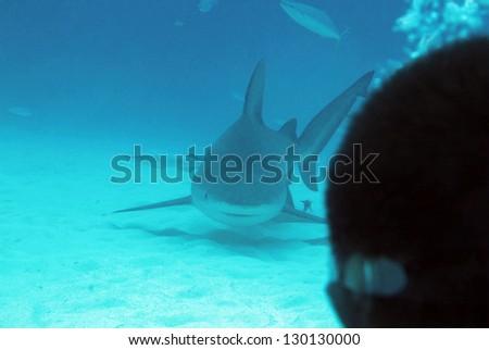 Bull Shark (Carcharhinus Leucas) Approaching Diver, Playa del Carmen, Mexico - stock photo