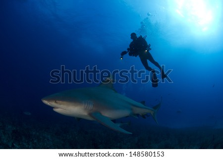 Bull Sharks in the Bahamas