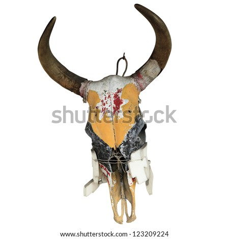 Bull Skull isolated on white background with clipping path - stock photo