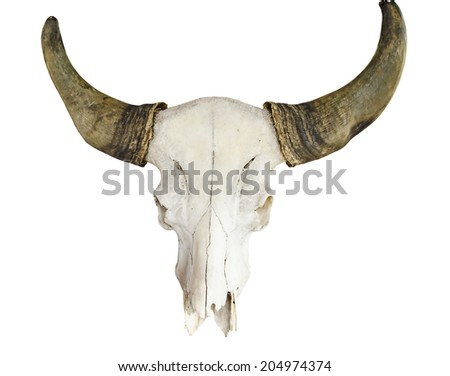 Bull Skull isolated with clipping path