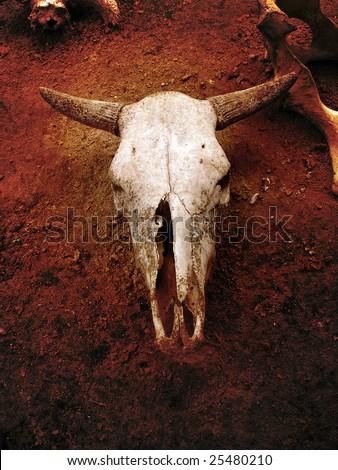 Bull Skull Skeleton - stock photo