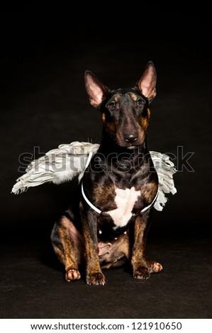 bull terrier wing - stock photo