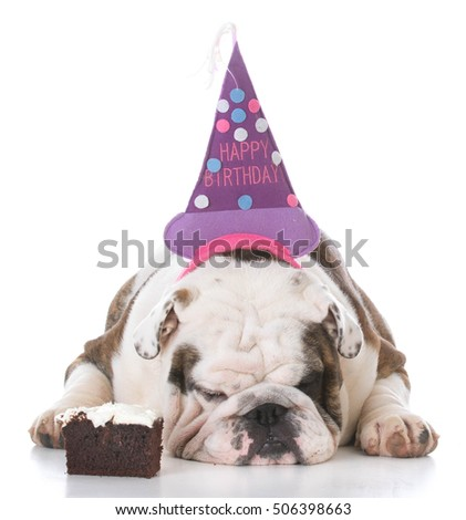 bulldog wearing birthday hat with piece of cake isolated on white background
