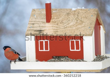 Bullfinch eating at a red bird feeder during winter. Sweden - stock photo