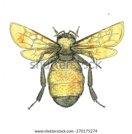 Bumble bee illustration - stock photo