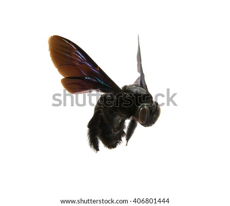 bumble bee on a white background - stock photo