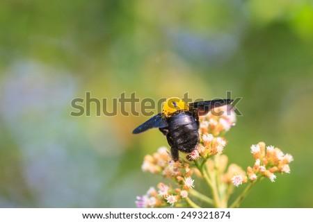 Bumble bee sitting on wild flower in garden - stock photo