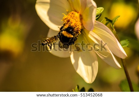 Bumblebee and bee on flower