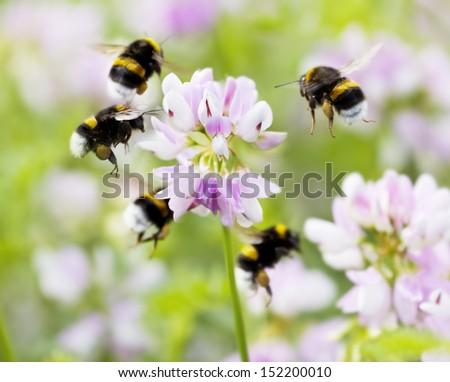 bumblebee carousel - stock photo