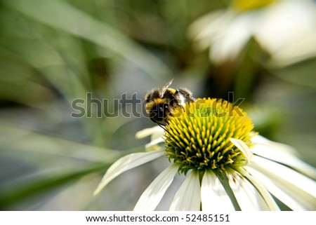 bumblebee on flower - stock photo