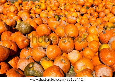 Bumper crop harvest of Halloween or Thanksgiving Day holiday pumpkins as agricultural background texture pattern - stock photo