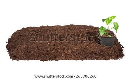 Bunch dirty  earthy peat young plant pots for seedlings - stock photo