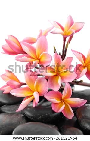 Bunch frangipani and pebbles  - stock photo