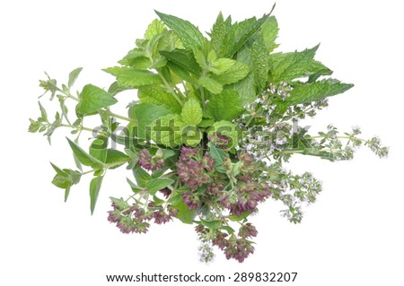 Bunch fresh herbs mint, thyme, lemon balm isolated on white background