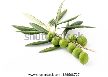 Bunch green olives