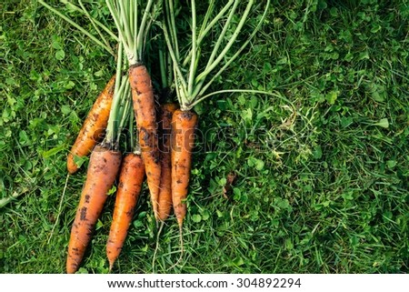 Bunch of a fresh unwashed carrots on a grass, top view - stock photo