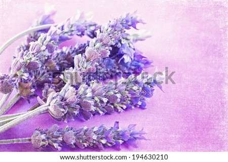 Bunch of a lavender flowers on a purple vintage background  - stock photo