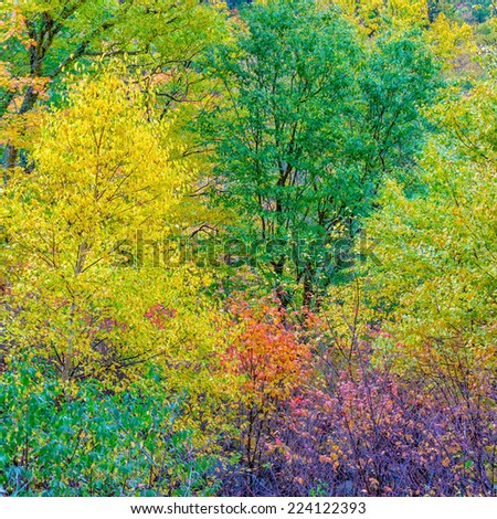 Bunch of Autumn Trees